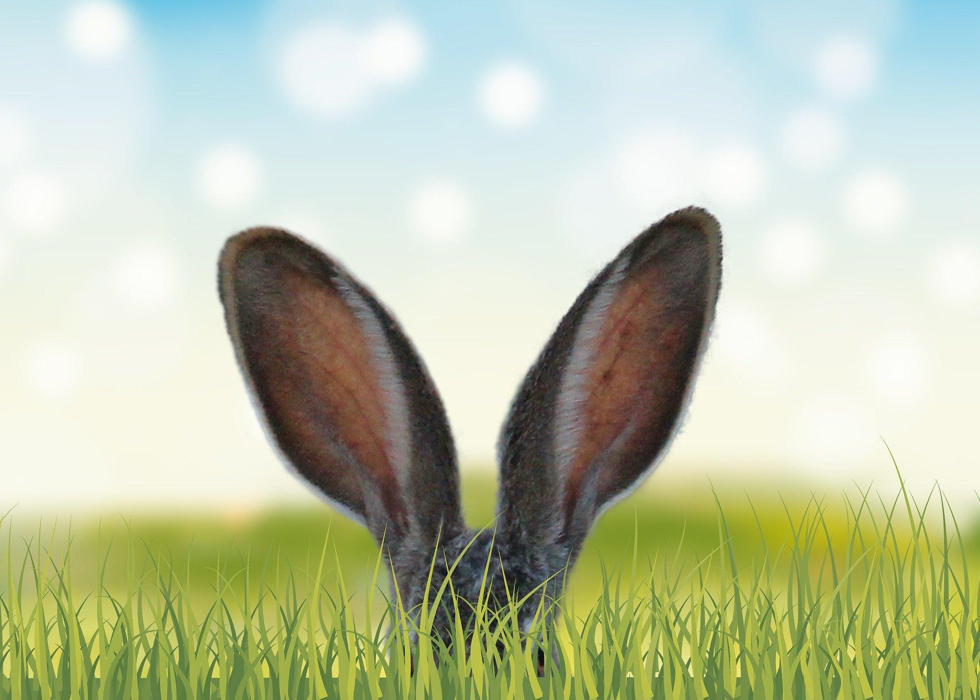 Pasen konijnenoren